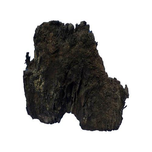 Mooreiche Fragment